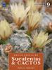 Enciclopédia de Suculentas & Cactos: Volume 9